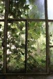 живущая природа Стоковые Фото