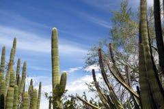 Живущая пустыня юго-западных США Стоковые Фото