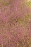 Живущая пустыня юго-западных США Стоковая Фотография