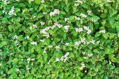 Живущая стена с цветками Стоковые Изображения