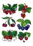 Живущие ягоды иллюстрация вектора