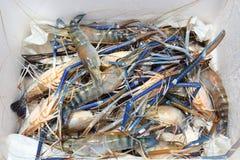 Живущие crawfish Стоковое Фото