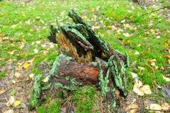 Живущий лес Стоковое фото RF