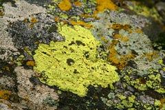 живущий камень Стоковое Фото