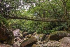 Живущий мост корней около деревни Nongriat, Cherrapunjee, Meghalaya, Индии стоковое фото