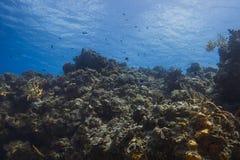 Живущий риф океана Стоковое Изображение RF