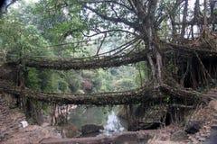 2 живущих моста корня протягивают через поток внутри Стоковые Фото