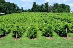 Живые зеленые цвета vienyard винодельни Стоковые Фото