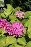 Живые розовые цветки зацветая, прекрасный красочный крупный план стоковое фото rf