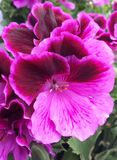 Живые, яркие цветки Стоковые Изображения