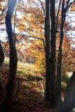 Живые coolorful деревья Стоковые Изображения RF