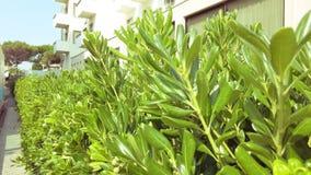 Живя загородка рододендрона в городе сток-видео