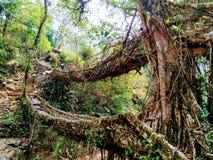 Живя meghalaya Аруначал-Прадеш моста корня стоковые изображения rf