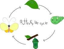 жизненный цикл бабочки Стоковая Фотография