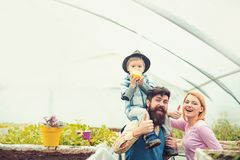 Жизнерадостная семья в парнике Отец в голубом жилете держа его сына на плечах пока ребенк ест яблоко E стоковые изображения rf