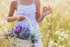 Жизнерадостные цветки рудоразборки ребенк на луге Стоковые Фотографии RF