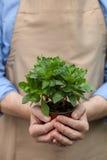Жизнерадостный старый садовник работает на парнике Стоковая Фотография RF