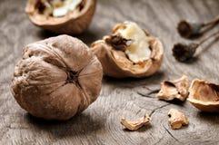 жизни грецкие орехи все еще Стоковые Изображения RF