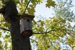 жизни дома птицы осени никто Стоковое Изображение