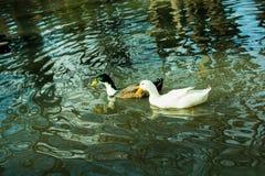 Жизни птиц Стоковое Изображение