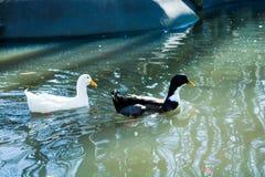 Жизни птиц Стоковые Изображения RF