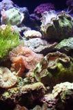 жизнь аквариума Стоковые Изображения