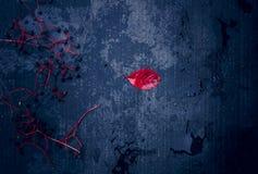 1 жизнь все еще серебряный нож, ложка, и пуки одичалых виноградин Конец-вверх Взгляд сверху Стоковое Фото