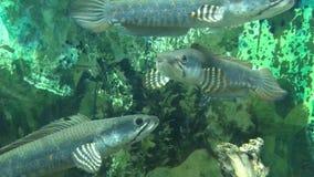 Жизнь в аквариуме 004 видеоматериал