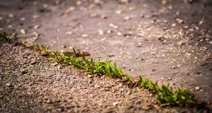 Жизнь в бетоне Стоковая Фотография RF