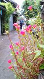 Жизнь в малой майне в Бангкоке Стоковое Фото