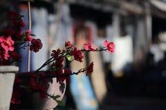 Жизнь в Пекине Hutong Стоковое Фото