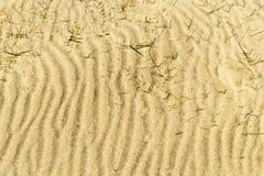 Жизнь в пустыне Стоковые Изображения RF