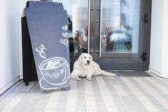 Жизнь в современном городе - большой красивой собаке около дружественного к любимчик кафа стоковое фото