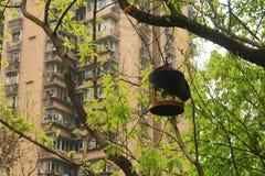 Жизнь в Чунцине Стоковое Фото