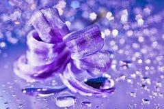 жизнь гиацинта цветка все еще Стоковая Фотография RF