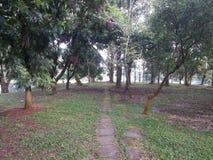 Жизнь дерева 100 лет старая в парке стоковое фото