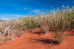 жизнь дюн стоковая фотография rf