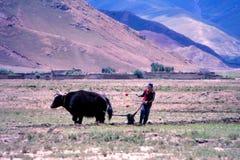 Жизнь деревни в Тибете Стоковая Фотография RF
