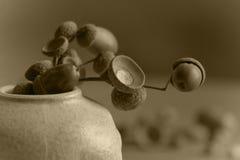 жизнь жолудей все еще Стоковые Фотографии RF