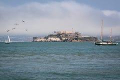 Жизнь залива и плавание Сан-Франциско стоковое фото rf