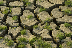 жизнь засухи новая Стоковые Фотографии RF