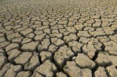 жизнь засухи новая Стоковые Фото