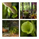 жизнь зеленой дома Стоковая Фотография RF