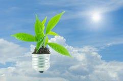Жизнь зеленого растения новая на лампе из шарика дальше, зеленая энергия conc Стоковые Изображения RF