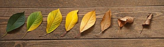 Жизнь лист Стоковая Фотография RF