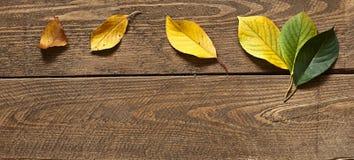Жизнь лист Стоковое Изображение RF