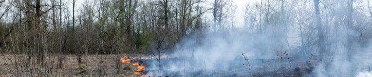 Жизнь и пустота Лесной пожар Стоковые Изображения RF