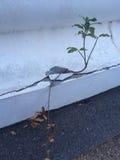 Жизнь и умирает дерево Стоковое фото RF