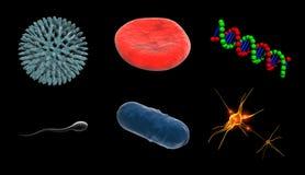 жизнь клеток Стоковое фото RF