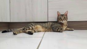 Жизнь кота стоковые фото